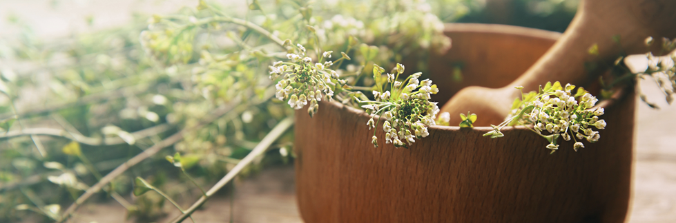 La migliore Erboristeria di Bari – Prodotti naturali, integratori e piante officinali